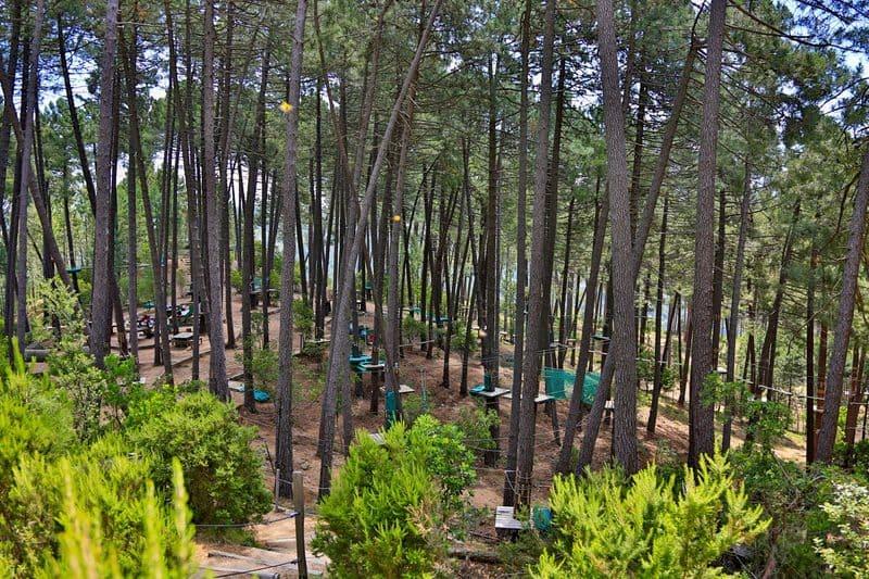 Parmi les activités proposées en Corse : l'accrobranche !