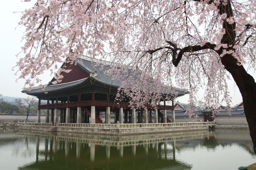Pour voyager en Corée du Sud, quelques précautions sont à prendre !