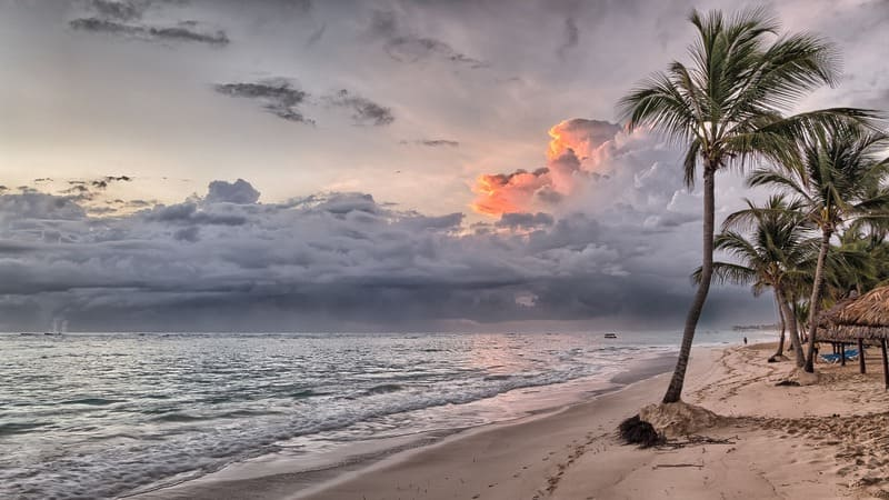 comment organiser un voyage - plage déserte et palmier