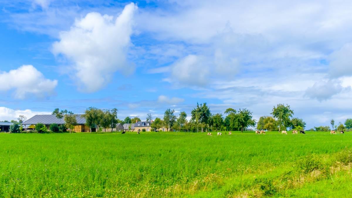 normande-evasion-suisse-champ-vert-ciel-bleu